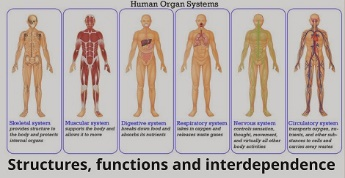 human_systems